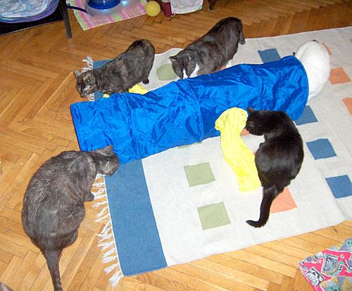 kot kotek kocur kocurek kotka koteczka do adopcji warszawa