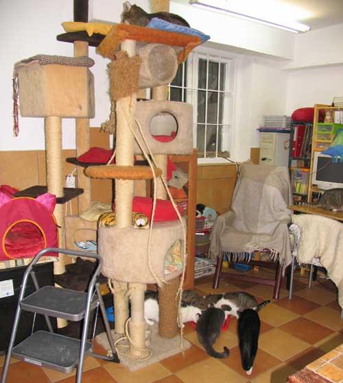 kot kotek kocur kocurek kotka koteczka psy pies do adopcji warszawa