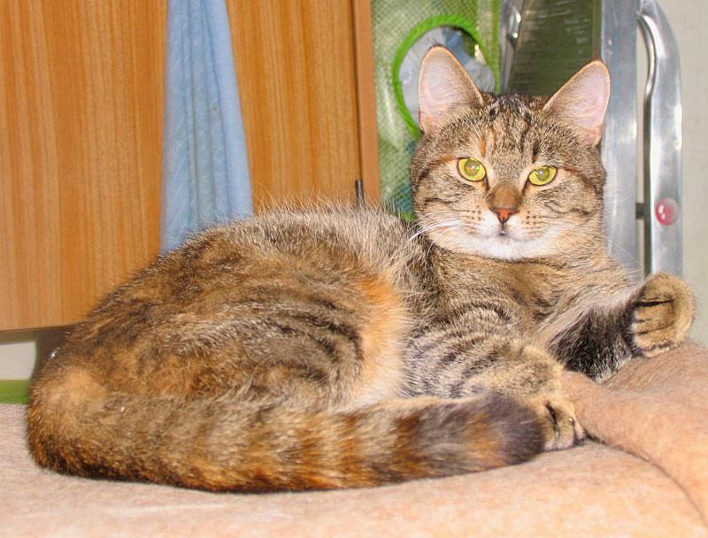 piksi kotka z syndromem urologicznym