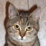 koty do adopcji warszawa