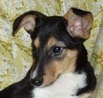 zwierzęta do adopcji warszawa Kuleczka pies psy suka suki