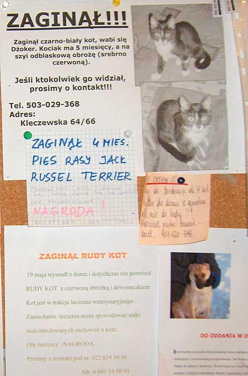 89148cf7a524a8 Przykłady psich i kocich tragedii